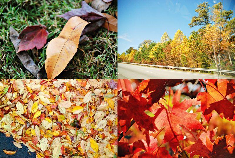 Fall_web